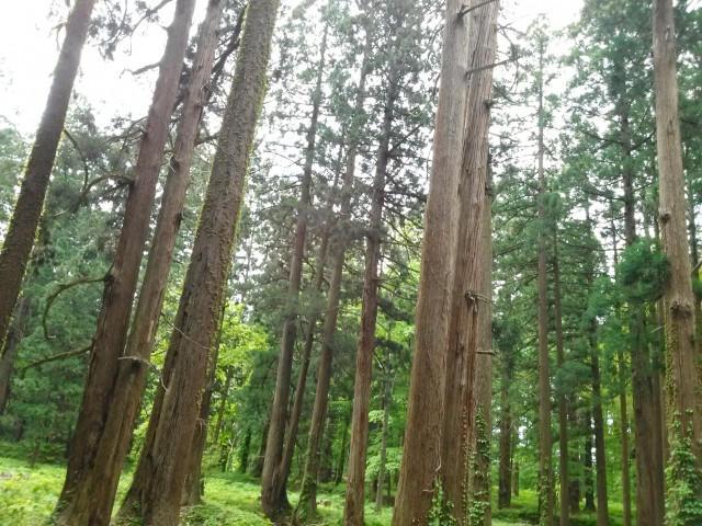 自然素材として代表的な木材